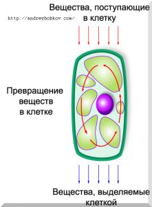 здоровье клетки