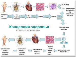 система восстановления здоровья на клеточном уровне