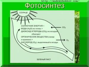 преобразования энергии биосферы
