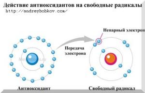 антиоксиданты и свободные радикалы схема взаимодействия